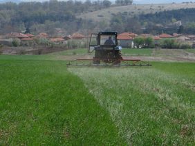 Harrowing of the test field of Spelt, April 2017, Novi Izvor, Bulgaria